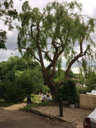 Omved Gardens summer 2017